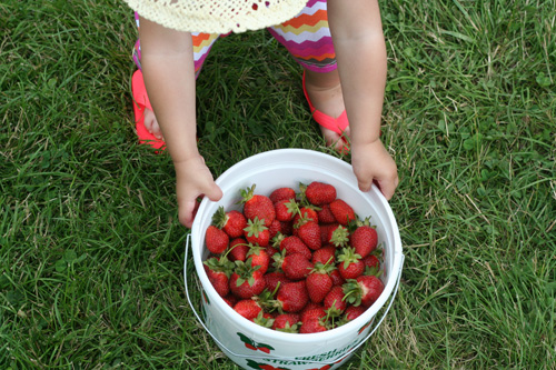 virginia grown strawberries