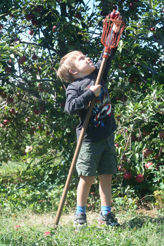 apple picking sticks at stribling