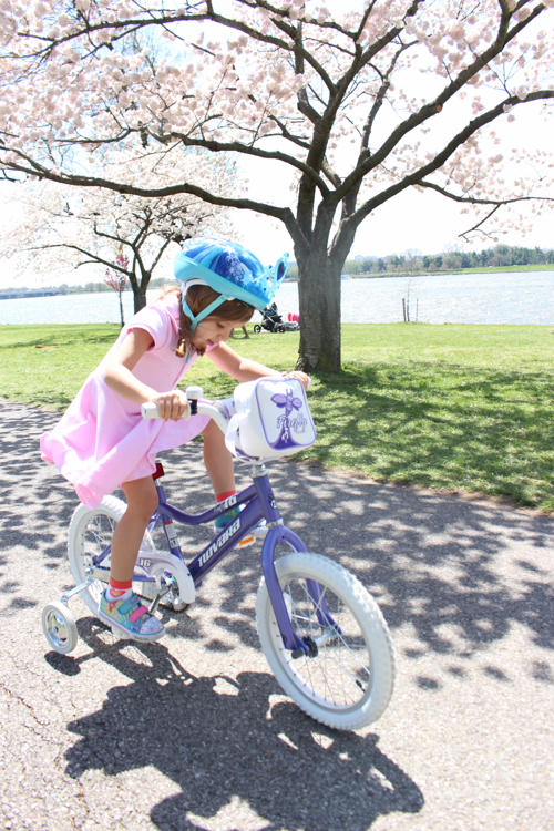 biking dc cherry blossoms | foodietots.com